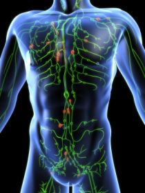 Our Lymphatic System