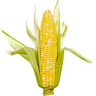 Is there anything wrong with CORN?