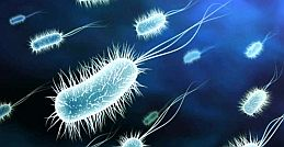 Why are PROBIOTICS essential to good health?
